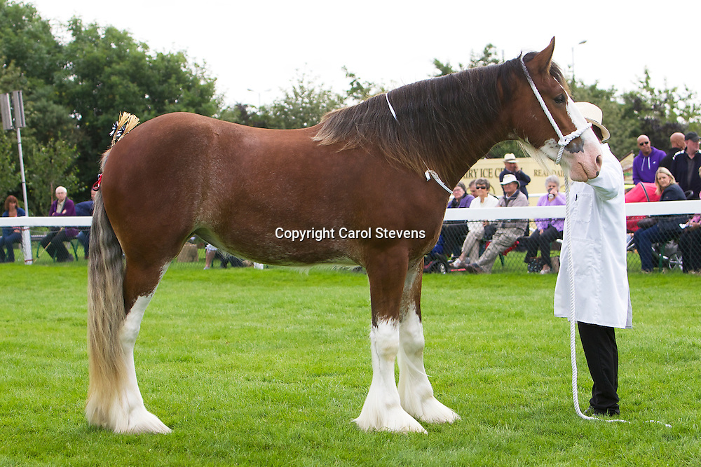 Mr G A Pinkney's bay filly  Jacktons Miss Adele<br /> 2 years old<br /> Sire  Jacktons Discovery<br /> 4th  Filly or Gelding, yearling or 2 year old class