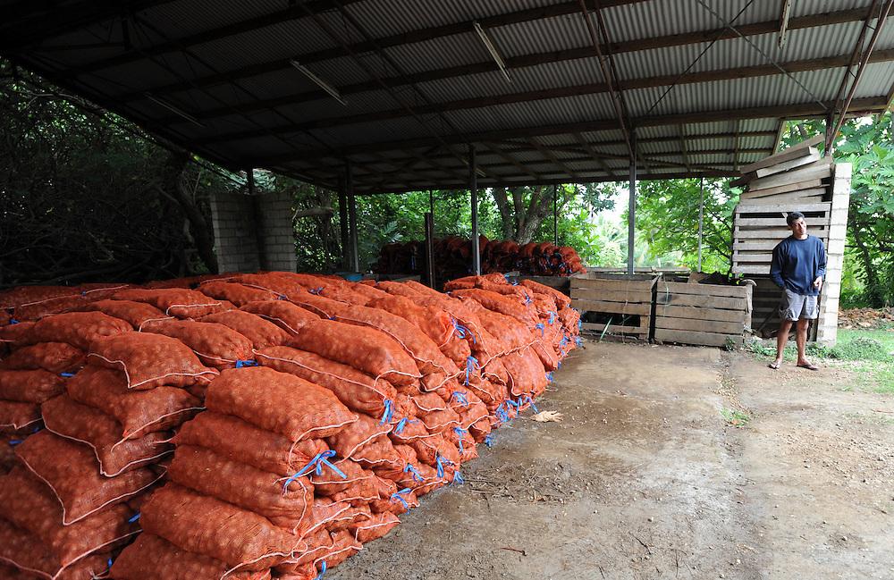 Tinopai Farm's Pousima Afeaki with bagged Japanese Taro, Pacific Mission 2012, Nuku'alofa, Tonga, Tuesday, July 24, 2012. Credit:SNPA / Ross Setford