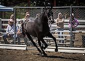 Horse No 30
