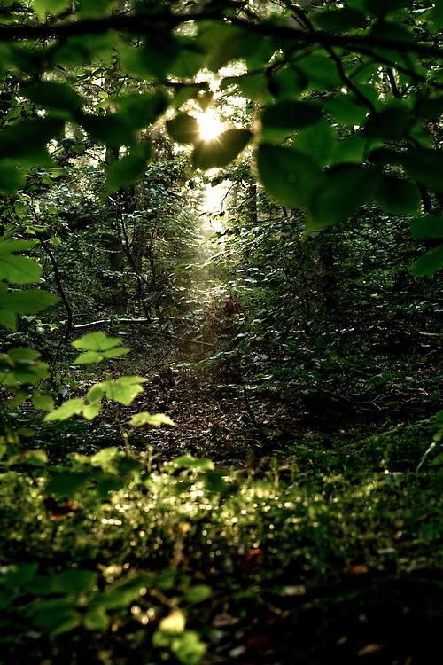 Natur, solskin, Marcelisborgskoven, århus