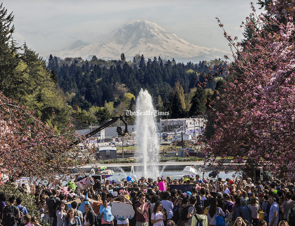 Students flocked to a walkway at the University of Washington campus leading down to Drumheller Fountain after Ellen DeGeneres tweeted they might appear on her show Monday, April 17, 2014. (Steve Ringman / The Seattle Times)