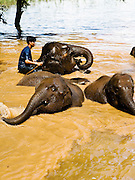 Elephant bathing time at Anantara Golden Triangle resort.