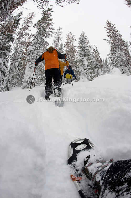 Low angle view of four people snowshoeing on a trail in the woods in deep powder in Bend, Oregon. (releasecode: jk_mr1033, jk_mr1035, jk_mr1034) (Model Released)