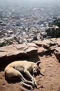 Stray dog sleeping close to Mehrangarh Fort