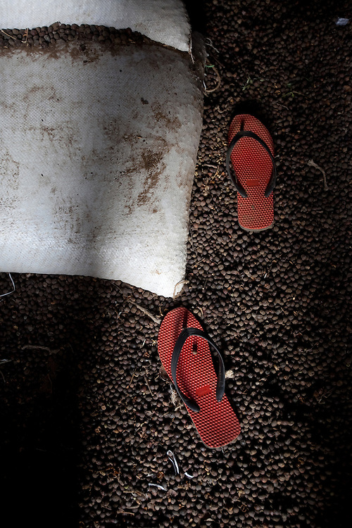"Slippers lie on coffee berries at a ""Dry"" process factory in Coorg, India,  on Sunday January 31, 2010. Photographer: Prashanth Vishwanathan/Bloomberg News"