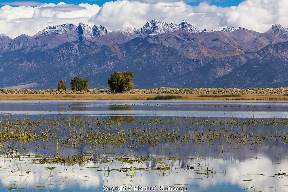The northern half of San Luis Lake provides a wildlife area for over 150 species of birds and waterfowl.  San Luis Lakes State Park and Wildlife Area, Colorado.