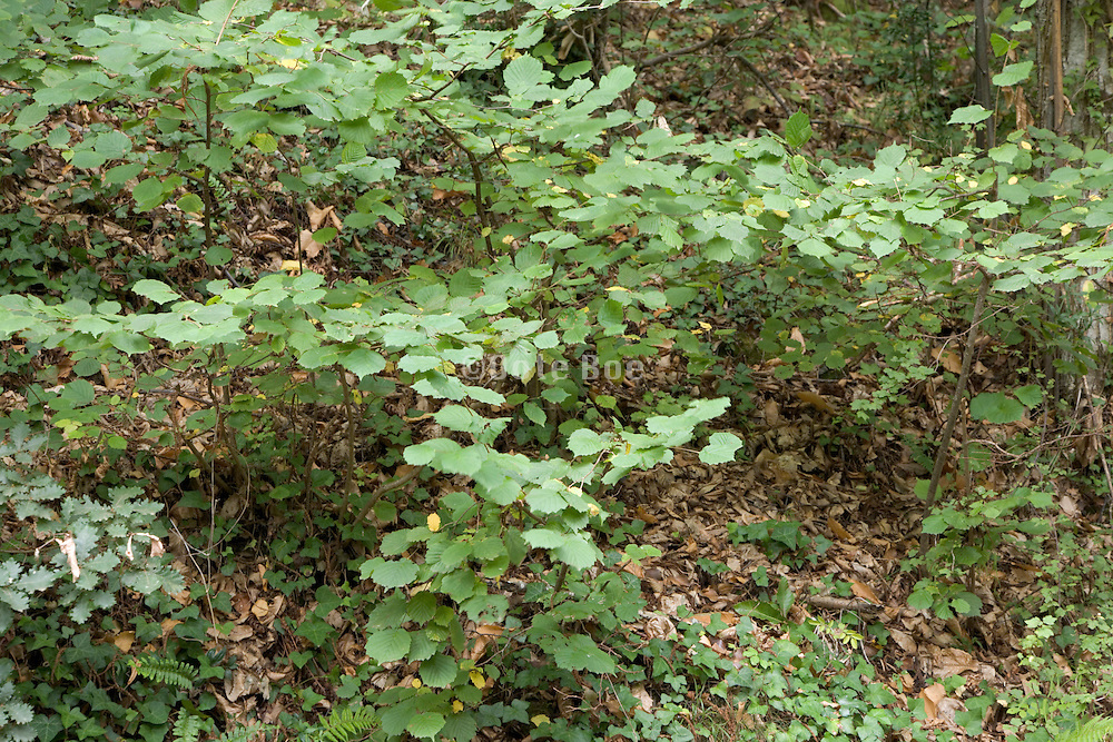 undergrowth in a forest