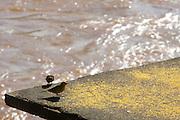 Ponte Nova_MG, Brasil...Passaros proximos ao rio Piranga em Ponte Nova...Birds nex to the Piranga river in Ponte Nova...Foto: BRUNO MAGALHAES / NITRO