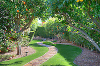 Fruit trees plantation in manor house garden
