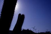Fortaleza_CE, Brasil...Detalhe de um cacto com uma usina eolica ao fundo em Fortaleza...The cactus detail with eolic energy in the background in Fortaleza...FOTO: BRUNO MAGALHAES /  NITRO