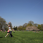 A game of Ultra Frisbee during a warm spring day in Central Park, Manhattan, New York, USA. Photo Tim Clayton