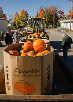 The second load of pumpkins are ready for delivery from Vista Foods to Laconia Middle and High Schools for Saturday's Pumpkin Fest.  (Karen Bobotas/for the Laconia Daily Sun)