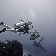 Divers diving on the Great Barrier Reef.