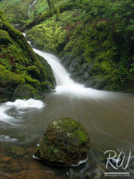 Cataract Creek, Marin Municipal Water District, California