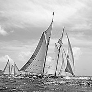 Square black and white of Coral of Cows.<br />