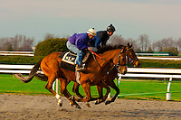 Morning workouts, Keeneland Race Course, Lexington, Kentucky USA