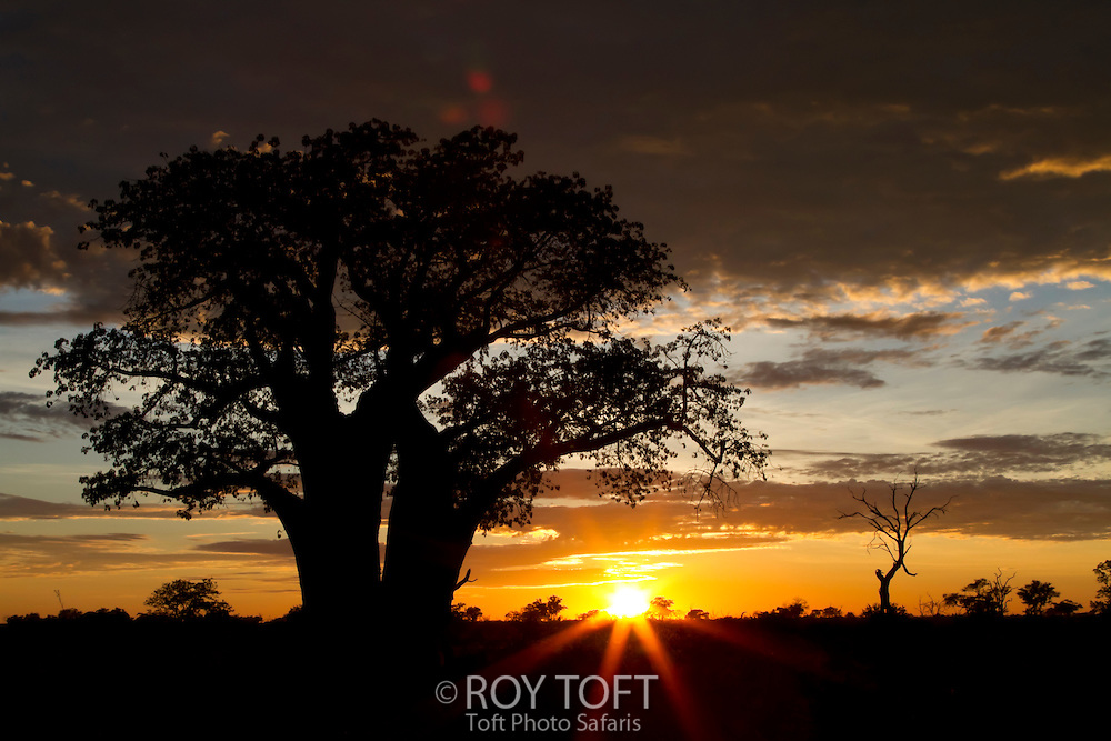 Sunset over the Okavango Delta, Botswana, Africa