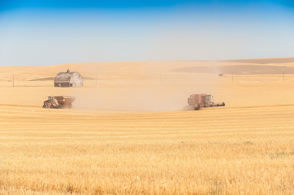 Combines cutting summer wheat on huge tracts of rich farmland in Eastern Washington State'ds Palouse region.