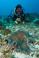 Diver with Clark's anemonefish, Yapen, West Papua, Indonesia.
