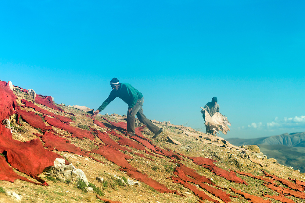 FEZ, MOROCCO - 1st DECEMBER 2016 - Workers place animal hides to dry on the hills overlooking the old Fez Medina, Middle Atlas Mountains, Morocco.