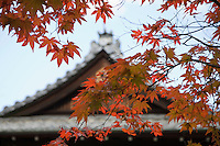 Japan Kyoto Tenju-an Temple roof with Japanese maple tree in foreground Autumn