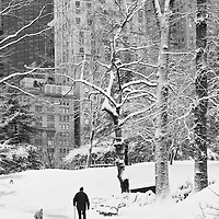 Central Park, Winter Wonderland in NYC