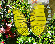 May 5, 2013 - Hempstead, New York, U.S. - Plants and garden decorations such as this large yellow butterfly, made of wire and fabric, are offered for sale by florist vendors at the 30th Annual Dutch Festival celebrating Hofsta University's Global Campus.