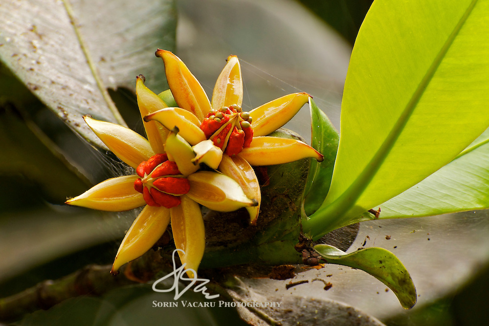 Seeds of New Life in the Rainforest