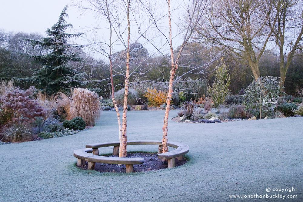 Curved bench seats around three birch trees - Betula nigra 'Heritage' on a frosty morning. Design: John Massey, Ashwood Nurseries
