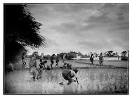 Rice planting, Uttar Pradesh.