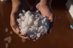 Camargue-Aigues Mortes. Il Fleur de Sal appena raccolto nelle mani di salinaio.
