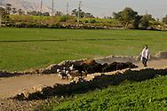 Egypt. Louxor - countryside , Thebes side  Louxor - Egypte    /  la campagne sur la rive thebaine  Louqsor - Egypt   /  LOUX018