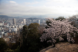 Cityscape of Hiroshima with Cherry Blossom