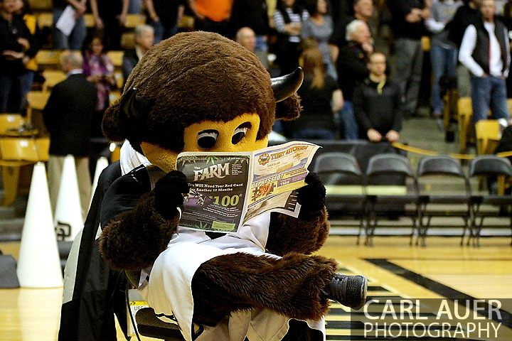 January 10th, 2013: While the USC Trojan team is introduced, Chips the CU Buffaloes mascot reads the newspaper before the start of the NCAA basketball game between the University of Southern California Trojans and the University of Colorado Buffaloes at the Coors Events Center in Boulder CO