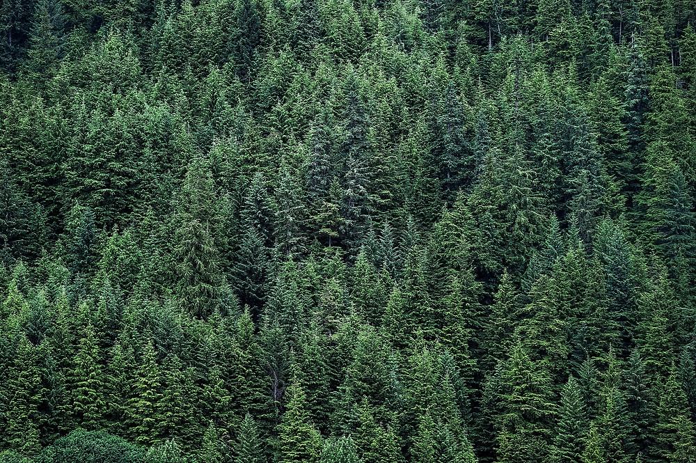 Boreal forest , Alaska, USA.