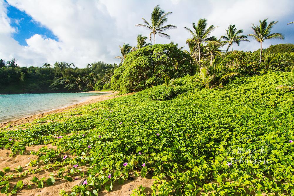 The beautiful palm tree lined beach at Papa'a Bay, Kauai, Hawaii
