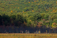 Mamakating - Sunlight and shadows at the Bashakill Wildlife Management Area on Oct. 8, 2014.