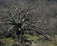Bosque seco en el camino entre Crucita y Manta