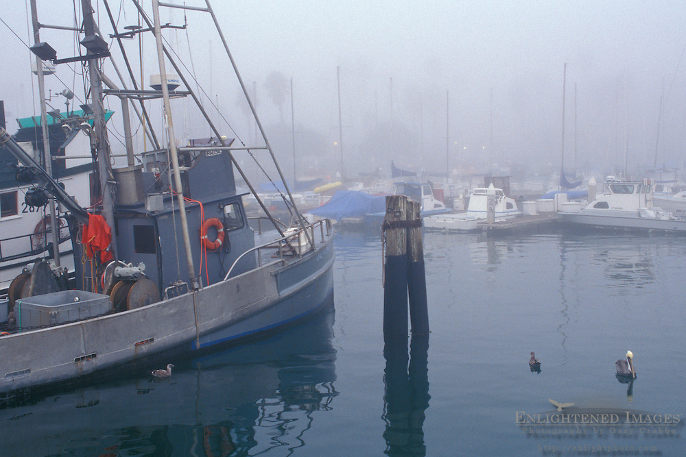 Commercial Fishing boats docked in marina in morning fog, Santa Barbara Harbor, Santa Barbara, Southern Coast, California