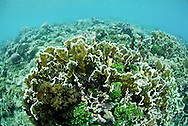 """Isla Grande is an exciting and popular place in Panama that people simply know as """"La Isla"""" (The Island). The island is inside the Portobelo National park, just 5 minutos by motor boat from the small town of La Guaira on the main land that makes its living out fishing and tourism.Pictured: Healthy coral reef"""