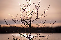 Bare tree at sunset in Northern Wisconsin.