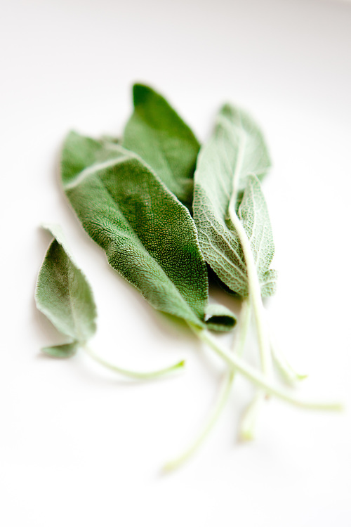 Fresh sage leaves with a short depth of field on a white table.