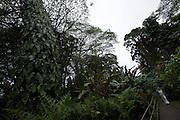 Big Island. Akaka Falls State Park. Rain forest.