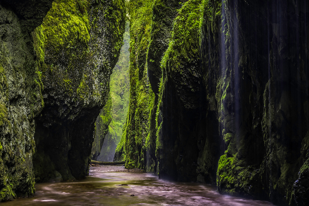 Rain streams down the walls of Oneonta Gorge in the Columbia River Gorge of the Pacific Northwest creating a surreal landscape photography experience.