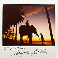 Last elephant on St. Lucia, Polaroid Spectra