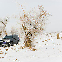 SUV vehicle riding on a snowy road. Diversiform Poplar Forest, Bachu County, Xinjiang, China