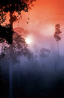 Sunrise, Jungle, Borneo<br />