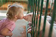 Jasmine, 18 months old, shows a piglet some love at the Clallam County Fair. It seems to be mutual.<br />