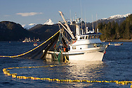 The F/V Jamboree fishing during the Sitka Sound herring sac roe fishery in Alaska.