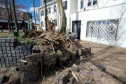 Lightning struck and shattered a tree in many pieces during a April 2 storm in NorthWest Philadelphia.